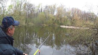 ЗАКИНУЛ ПОПЛАВОК В ДИКОЕ БОЛОТО И ОН КЛЮЁТ Ловля карася Рыбалка на поплавок