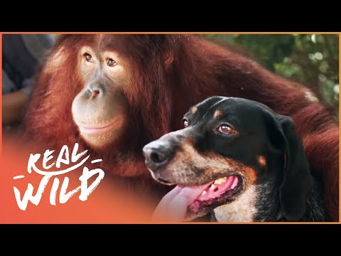 The World's Most Unlikely Animal Relationships | Animal Odd Couples | Real Wild