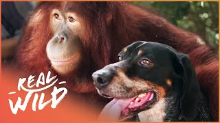 The Weirdest Animal Relationships | Animal Odd Couples | Real Wild