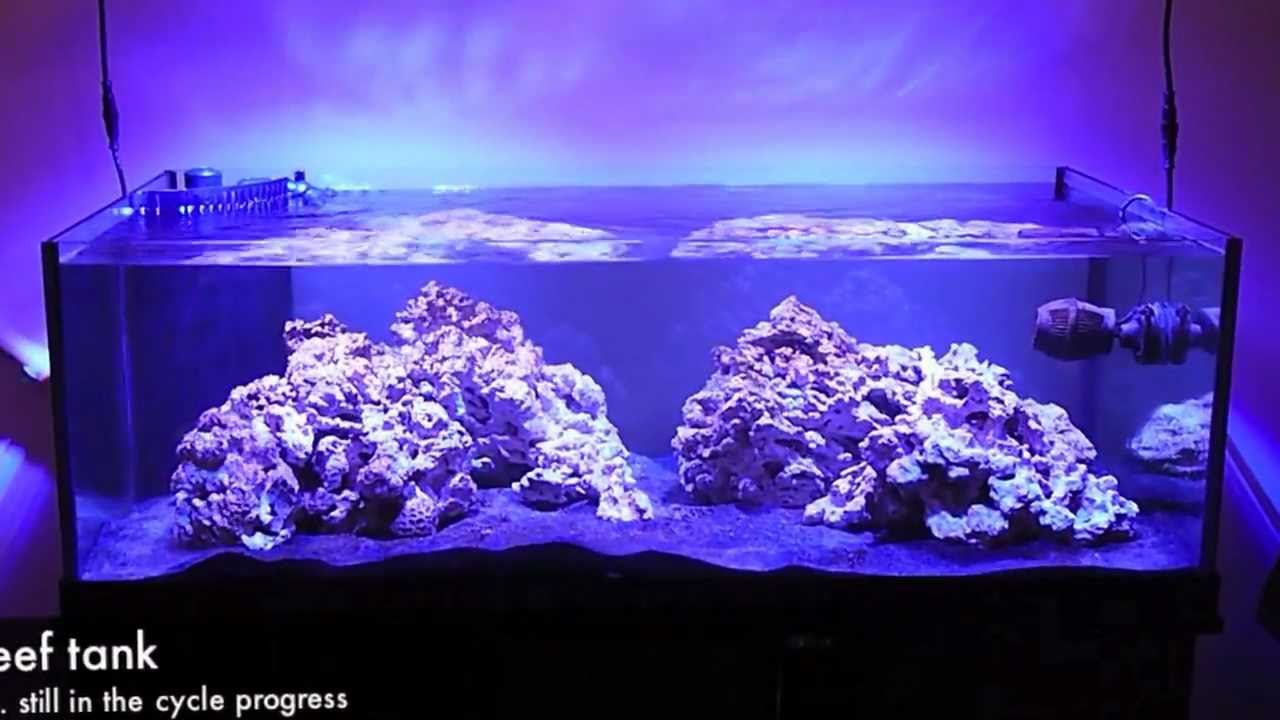 80 gallon rimless reef tank cycle period day 32 youtube for Deep blue fish tanks
