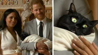 Prince Harry and Meghan Markle introduce their new cat