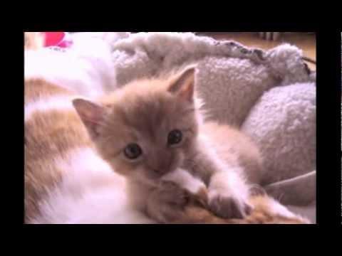Adorable Kitten Bites Cat S Ears Youtube