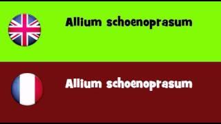 FROM ENGLISH TO FRENCH = Allium schoenoprasum