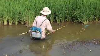 Fishing with Electricity in Vietnam WTF?