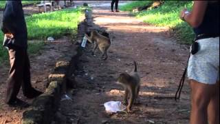 Monkey Lover | Love of Monkey | Funny Monkey