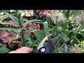 Jak postępować z roślinami cebulowymi po przekwitnięciu