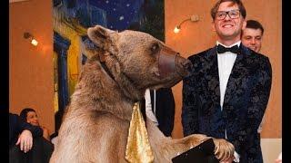 Медведь на свадьбе в Москве