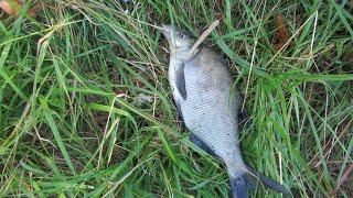 ПЕРВЫЙ УЛОВ Весенняя Рыбалка с берега на донки