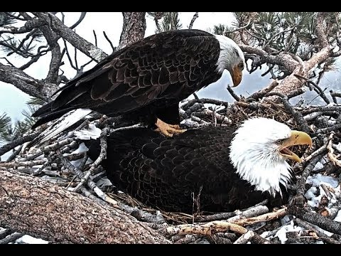 3-21-19 Big Bear Eagles~  Not On My Back!