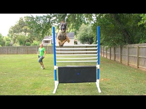 High Jumping Dogs