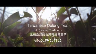 Taiwanese Oolong Tea:  A Thriving Tradition