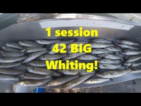 42 BIG Whiting in 1 session!! Nerang River - 24 Hour Fishing Bonanza (Part 2)