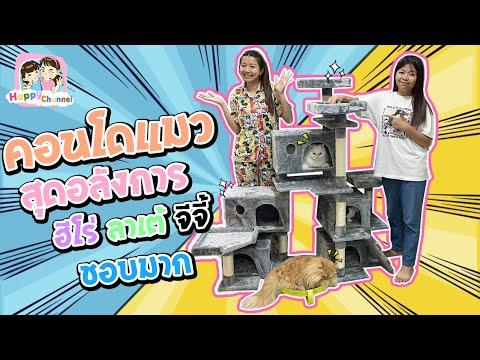 ลาเต้ ฮีโร่ จีจี้ ได้บ้านใหม่ คอนโดแมวสุดหรู พี่ฟิล์ม น้องฟิวส์ Happy Channel