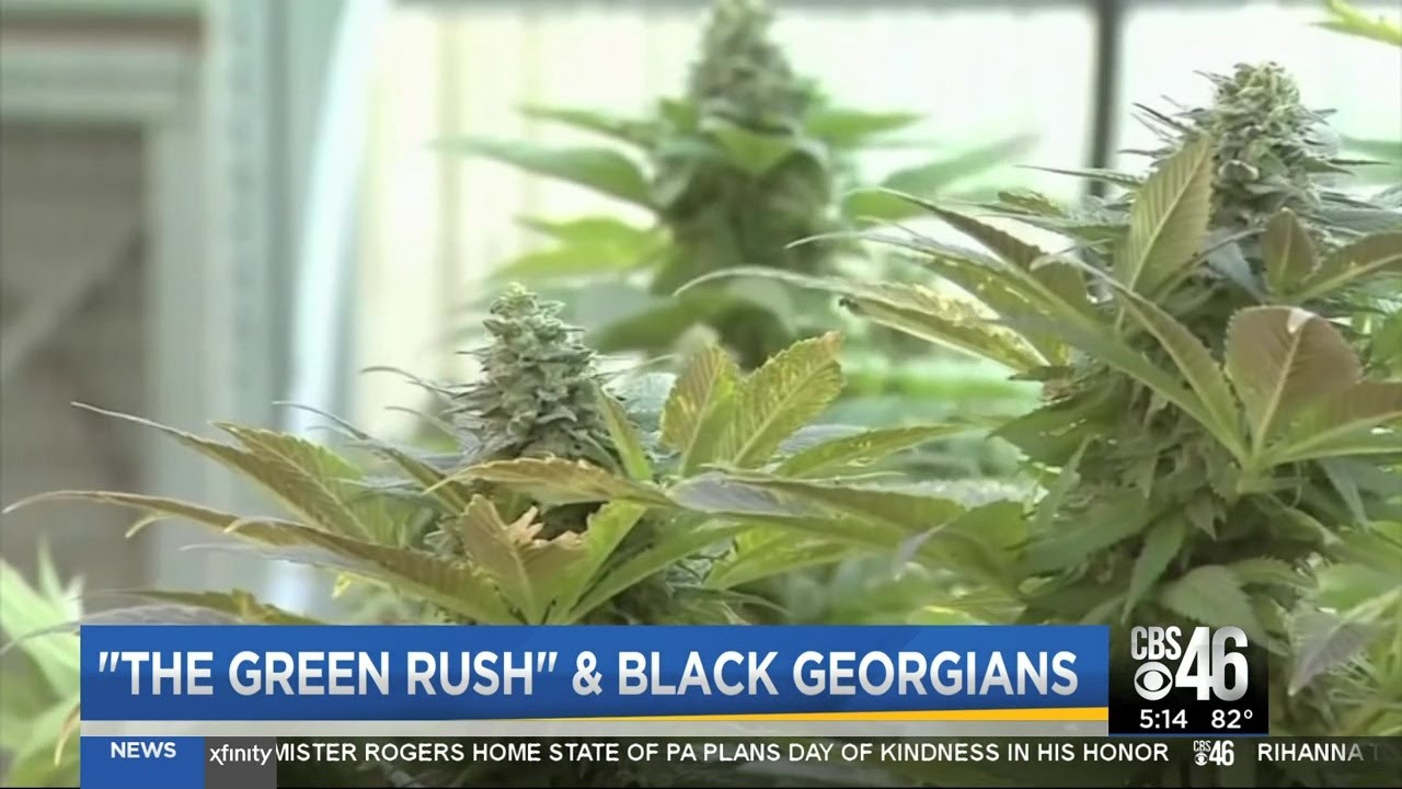 BLACK PEOPLE SHUT OUT OF THE MARIJUANA INDUSTRY