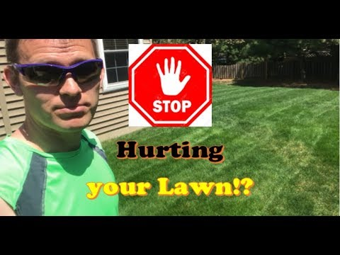 Stop Hurting your Lawn!! | Free Lawn Care Tricks to Get Thicker Grass (LAWN CARE)