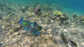 Red sea from Israel - MUST SEE!!!