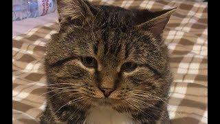 Хозяин переехал, бросив кота  в подъезде.Он жил в картонной коробке, пока не выпал снег…