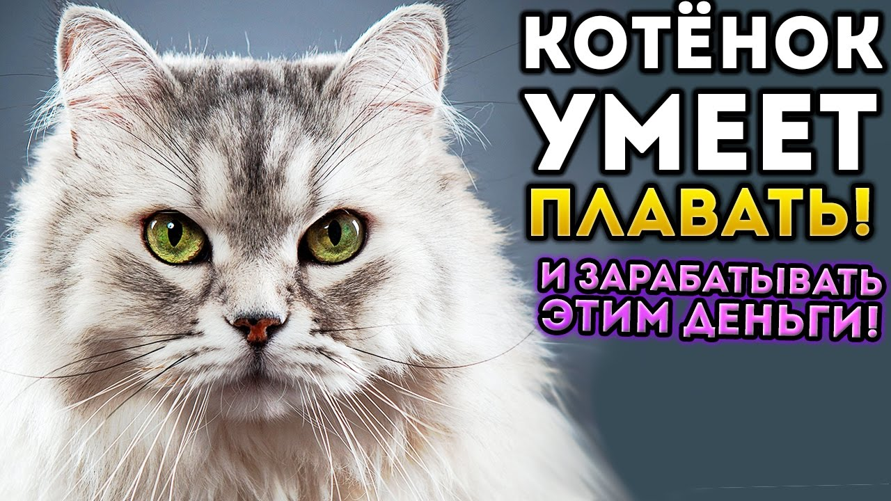 cats and mouse игра с выводом денег