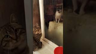 Кот просит впустить кошку)