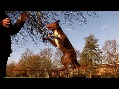 Dog Teaches Human to Slackline