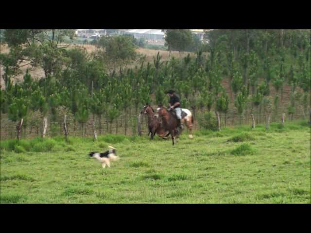 Caindo do Cavalo - Araucaria TRAVEL_VIDEO