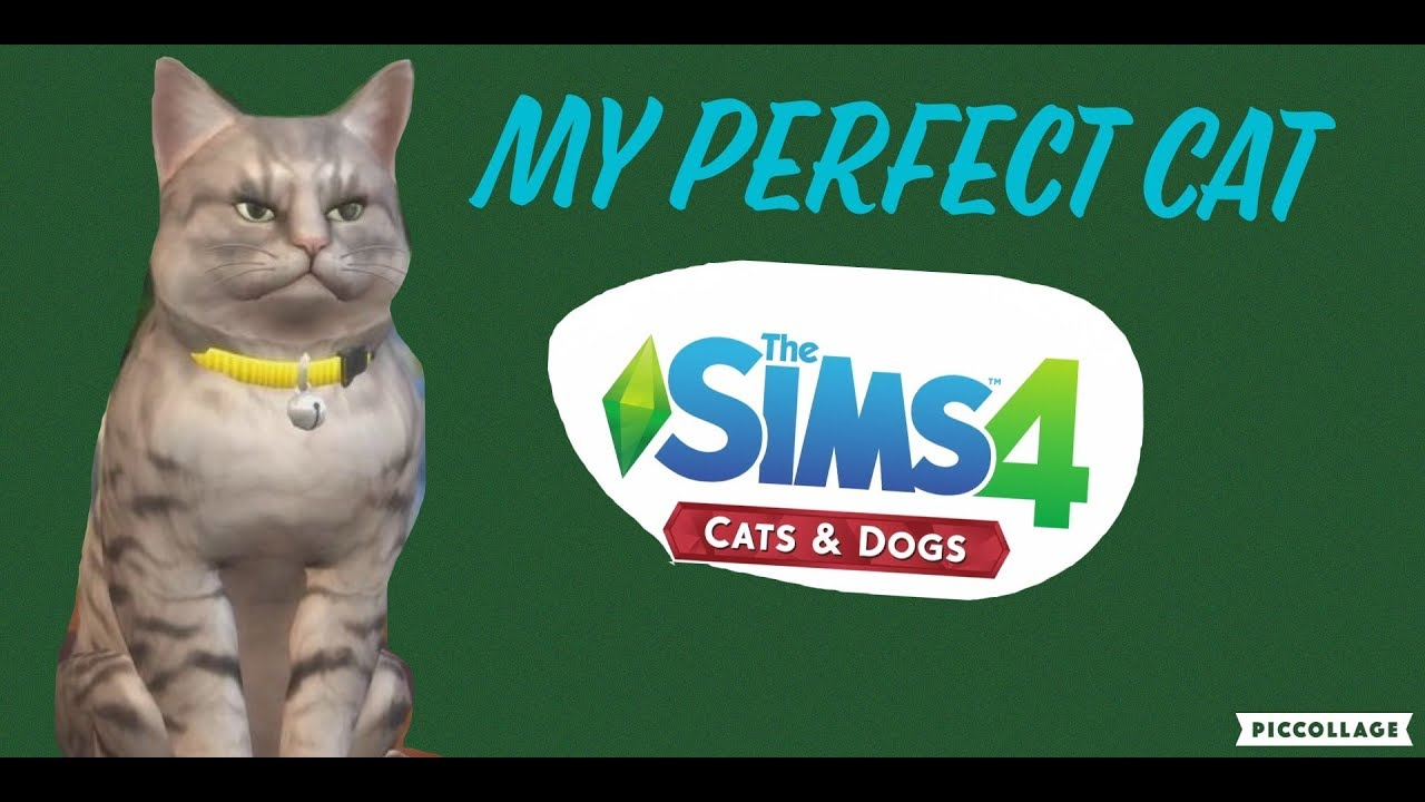 How Much Is Sims Cats And Dogs