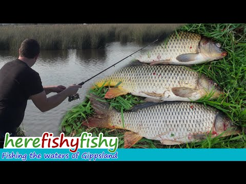 Carp Fishing The Macleod Morass - Here Fishy Fishy