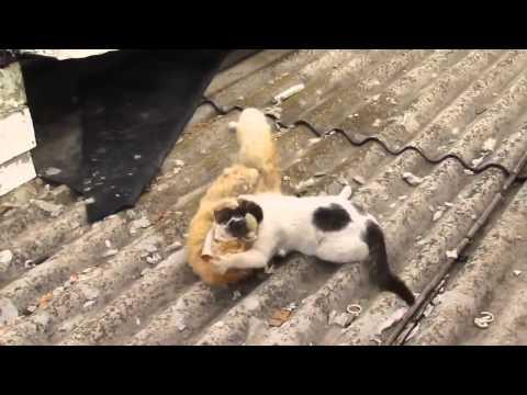 En Komik Kedi kavgaalari №004! FUNNY CATS FİGHTİNG 2016