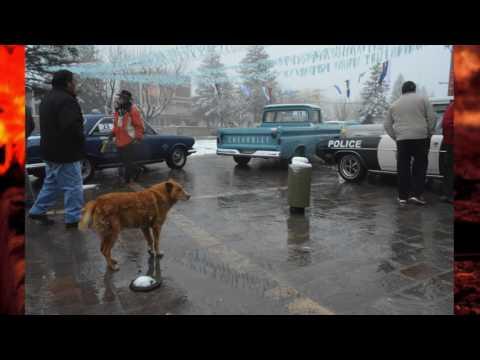 Conocé la historia de El Perro de Zapala, la mascota que fue adoptada por toda la ciudad