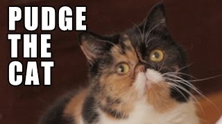 Pudge the Cat - Memed
