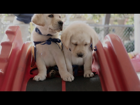 Thumbnail: Give a Dog a Job | Canine Companions and BraunAbility | Chrysler Pacifica