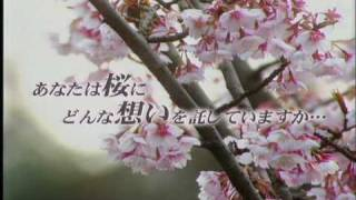 日航ジャンボ機墜落事故の特集を伝える滝川クリステルさんです。 (2007...