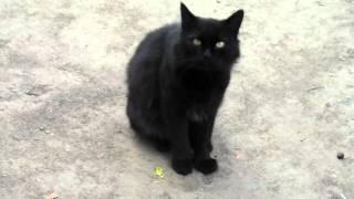 Белая кошка, черный кот / White  Cat, Black Cat