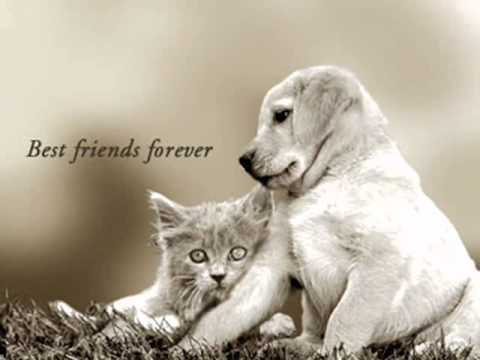 Cute Dog Wallpapers With Quotes 167 Love Shore Friends Wish You A Happy Journey 167 Youtube