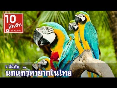7 นกแก้ว หายากสายพันธุ์ไทย