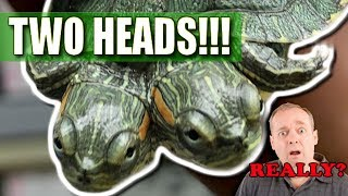 I GOT A TWO HEADED TURTLE!! WOW!!!   BRIAN BARCZYK thumbnail