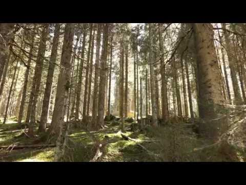 Die Elz im Katzensteig bei Furtwangen   Schwarzwald - Black Forest - Natur - Outdoor