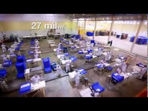 Brazilian Pet Foods - Institucional