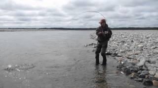 Рыбалка в Магадане на реке Яна 2015(Ловля Мальмы 2015., 2015-09-09T18:29:17.000Z)