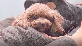 8 лучших лежанок и ковриков для домашних животных best bed and rugs for pets c AliExpress