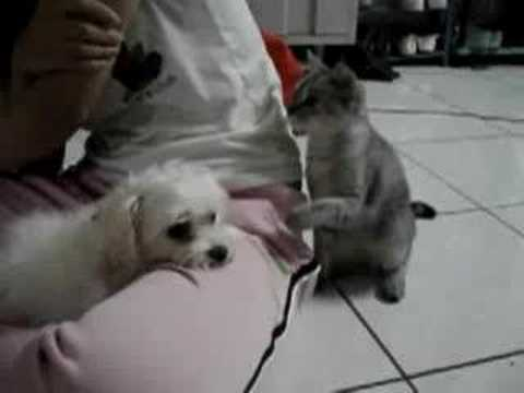 Funny Cat Hits the Dog