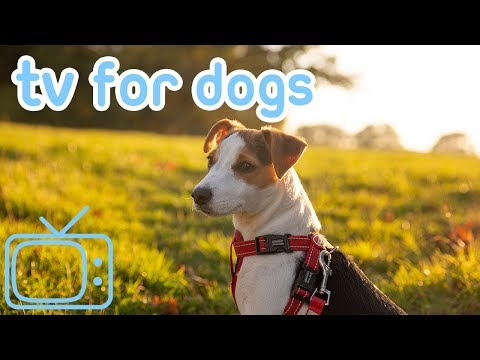 Dog TV! A Walk in the Park for Dogs Virtual Reality for Dogs! NEW 2019