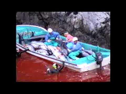 Operation Henkaku 2015 Dolphin Defense Campaign