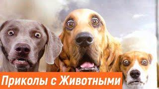 Приколы животными / Смешные животные / Собаки и кошки / Наглые обезьяны / Обезьяны нападают на людей