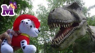 Маленький Щенок Маршал и Мария в парке динозавров ДИНОЛЕНД  pup in the Park