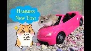 Hamster toy play and Fun Kids car ride |Kids Rhyme Songs My hat has three corners