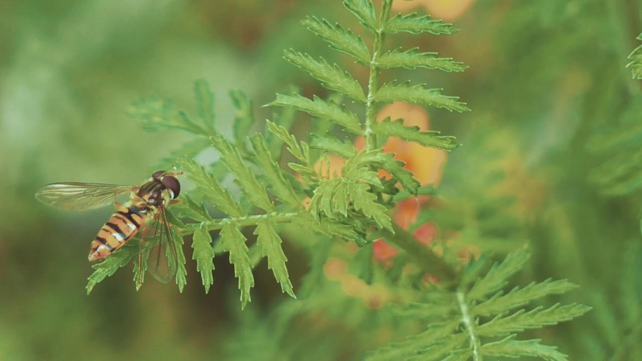Thiên nhiên quanh ta | Thanh Niên Miệt Vườn