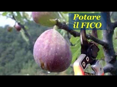 Download POTARE IL FICO