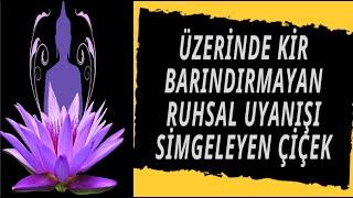 Üzerinde Kir Barındırmayan Ruhsal Uyanışı Simgeleyen Çiçek