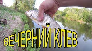 Рыбалка на поплавок на реке, крупная плотва и голавли 2021.